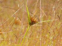 Pré de Wildflowers dans le domaine, foyer sélectif, l'espace dans le flou de zone Photo libre de droits