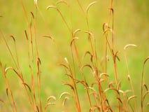 Pré de Wildflowers dans le domaine, foyer sélectif, l'espace dans le flou de zone Image libre de droits