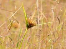 Pré de Wildflowers dans le domaine, foyer sélectif, l'espace dans le flou de zone Photographie stock