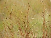 Pré de Wildflowers dans le domaine, foyer sélectif, l'espace dans le flou de zone Photo stock