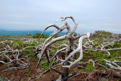 Pré des arbres morts Images stock