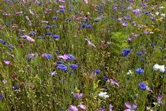 Pré des fleurs sauvages Image libre de droits