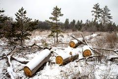 Pré en bois d'hiver d'identifiez-vous dans la forêt photographie stock libre de droits