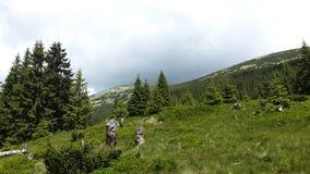 Pré en montagnes Photographie stock libre de droits