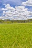 Pré en route Teton grand Photographie stock libre de droits