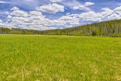 Pré en route Teton grand Images libres de droits