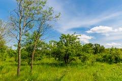 Pr? en steppe sous le ciel gentil photos libres de droits