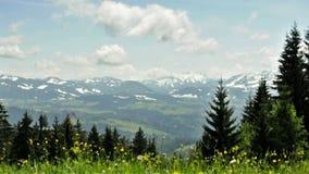 Pré en vent avec la vue vers les alpes en Autriche banque de vidéos