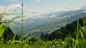 Pré en vent avec la vue vers les alpes en Autriche clips vidéos