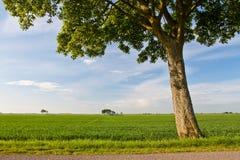 Pré et arbre de campagne Photo stock