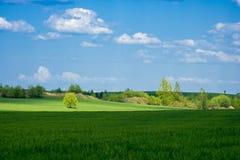 Pré et arbres verts Photographie stock libre de droits