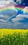 Pré et arc-en-ciel de fleurs Image stock
