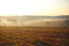 Pré et brouillard Photos stock