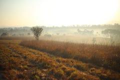 Pré et brouillard Image libre de droits