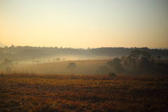 Pré et brouillard Photographie stock