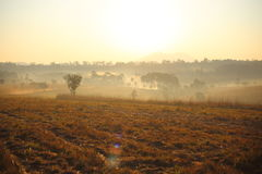 Pré et brouillard Image stock