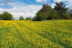 Pré et ciel jaunes avec de beaux nuages Photos stock