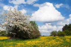 Pré et ciel jaunes avec de beaux nuages Photographie stock libre de droits