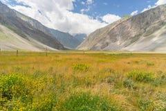 Pré et fleur entre le chemin vers Srinagar Photographie stock libre de droits