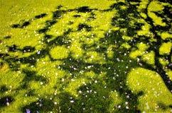 Pré et fleurs photographie stock libre de droits