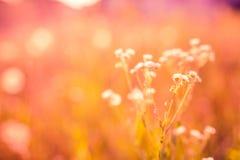 Pré et fleurs d'été dans le coucher du soleil Fond de nature Images libres de droits