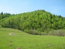 Pré et forêt Image libre de droits