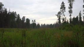 Pré et forêt après la pluie 4K banque de vidéos