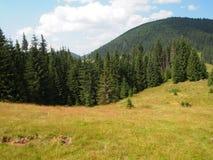 Pré et forêt de montagne Photo libre de droits