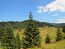 Pré et forêt de montagne Photo stock