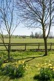 Pré et moutons anglais Photographie stock libre de droits