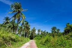 Pré et route tropicaux luxuriants avec des palmiers Photos libres de droits