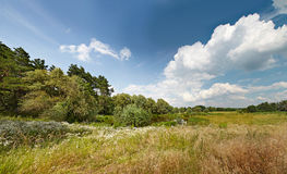Pré et un lac dans les bois par jour venteux Images libres de droits