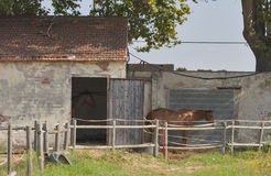 Pré et vieille grange pour des chevaux en Italie Image stock