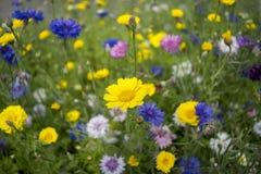 Pré fleuri image stock