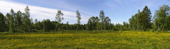 Pré fleurissant jaune en Suède Photo libre de droits
