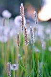 Pré fleurissant vert un jour d'été Photographie stock