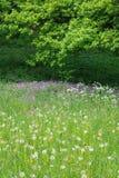 Pré floral estival photographie stock