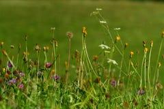 Pré florifère Photo libre de droits
