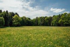 Pré gentil d'été avec la fleur et les arbres jaunes, landcape tchèque photos stock
