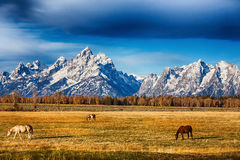 Pré grand de Teton Photographie stock libre de droits