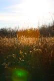 Pré herbeux Photo libre de droits