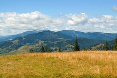 Pré jaune d'herbe, montagnes à l'arrière-plan Images stock