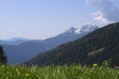 Pré pointu d'herbe en montagnes avant et unsharp image stock