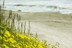 Pré sauvage près d'océan noir à la ressource 2 d'Olimp photo stock