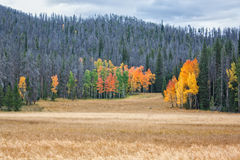 Pré scénique dans l'automne Photographie stock