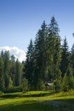 Pré scénique de forêt Photo libre de droits