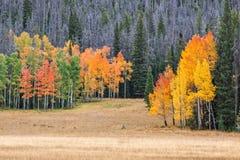 Pré scénique de montagne dans l'automne Images libres de droits