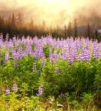 Pré sur l'Alaska Photographie stock libre de droits