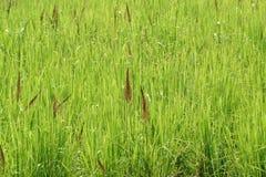 Pré vert Image stock