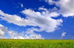Pré vert Image libre de droits